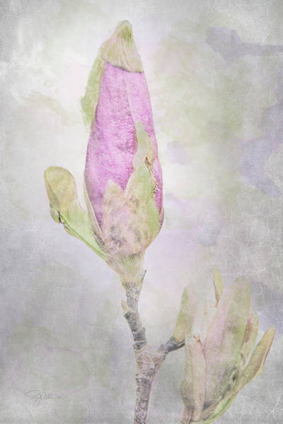 Blooming Tree Mixed Media - 10882 About To Bloom by Pamela Williams