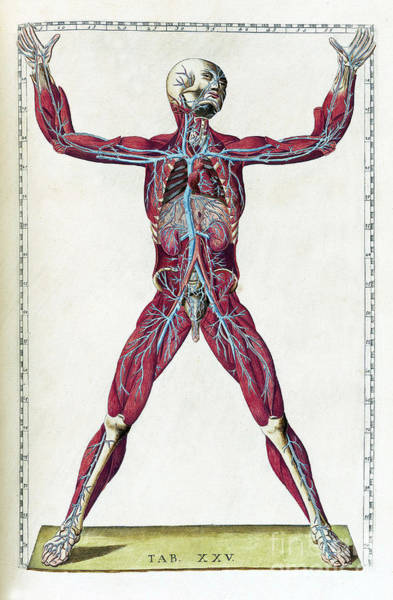 Photograph - Eustachi, Tabulae Anatomicae, 1783 by Science Source