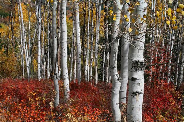 Photograph - Fall Splender  by Mark Smith