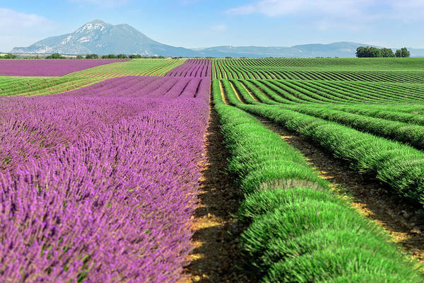 Harvesting Wall Art - Photograph - Valensole - Provence, France by Joana Kruse