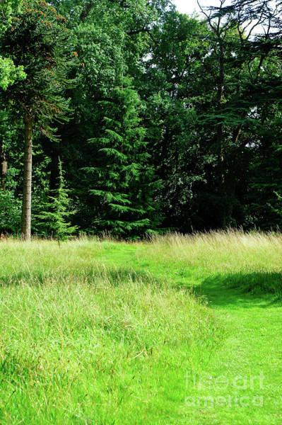 Wall Art - Photograph - Woodland Path by Tom Gowanlock