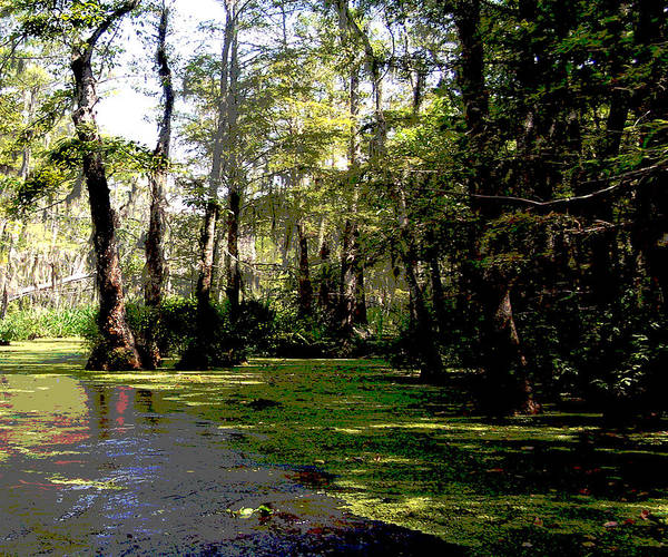 Photograph - 111215f Louisiana Swamp by Garland Oldham