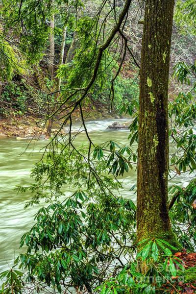 Photograph - Back Fork Of Elk River by Thomas R Fletcher