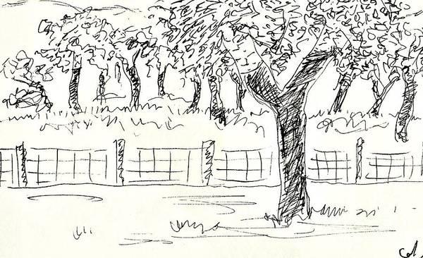 Drawing - Cork Oaks by Chani Demuijlder