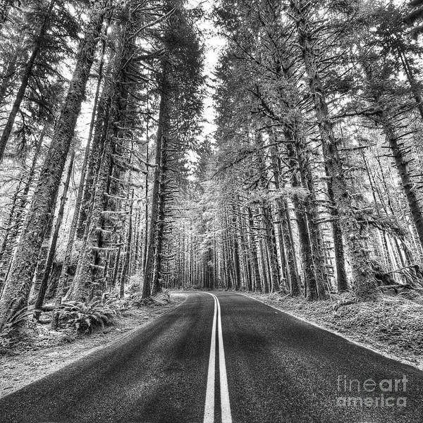 Wall Art - Photograph - Hoh Rain Forest by Twenty Two North Photography