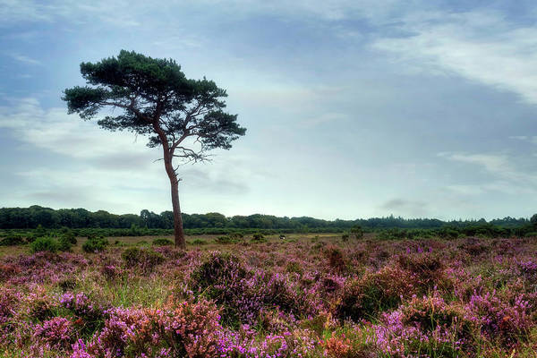 Sonne Wall Art - Photograph - New Forest - England by Joana Kruse