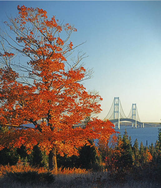 Photograph - 126309 Mackinac Bridge In Autumn by Ed Cooper Photography