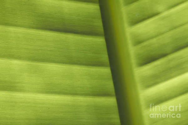 Single Leaf Wall Art - Photograph - Abstract  by Tony Cordoza