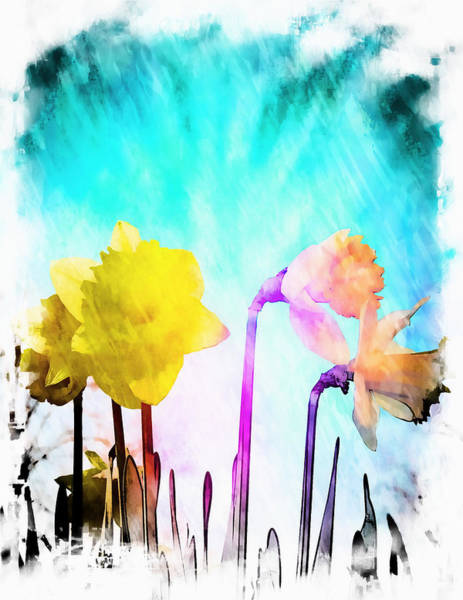 Pastel Drawing Photograph - Daffodils by Tom Gowanlock