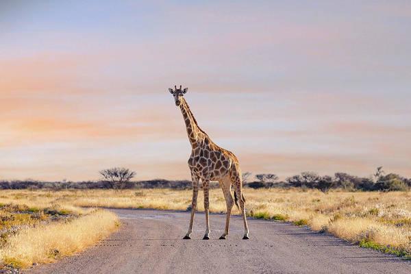 Wall Art - Photograph - Etosha - Namibia by Joana Kruse