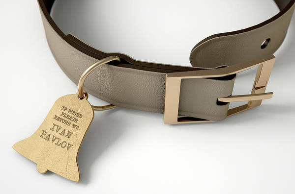 Wall Art - Digital Art - Leather Collar With Tag by Allan Swart