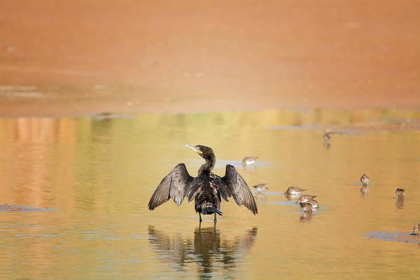 Photograph - Neotropic Cormorant by Tam Ryan