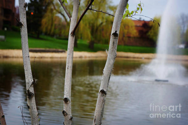 Wall Art - Photograph - Spring Landscape by Celestial Images