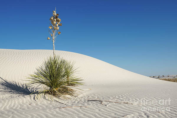 Yucca Elata Wall Art - Photograph - The Unique And Beautiful White Sands National Monument In New Mexico. by Jamie Pham