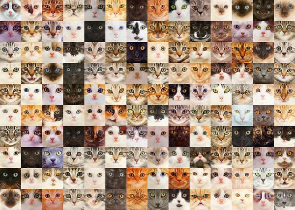 Photograph - 140 Random Cats by Warren Photographic