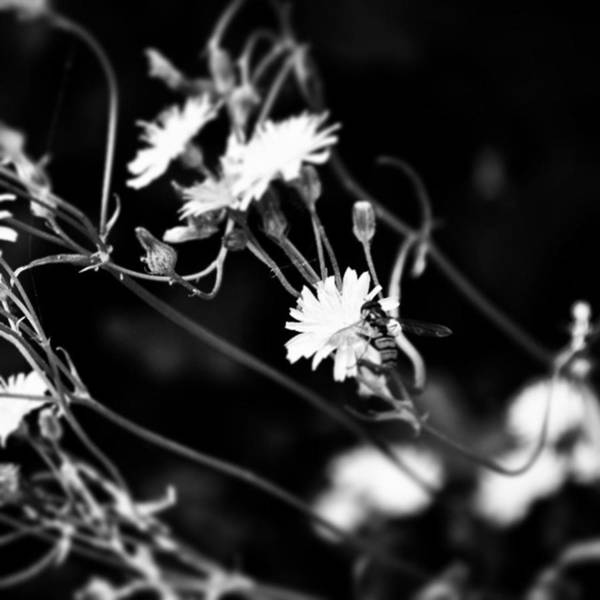 Blossom Photograph - Instagram Photo by Jason Michael Roust