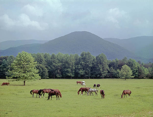 Photograph - 145933 Horses In Pasture Gsmnp by Ed Cooper Photography