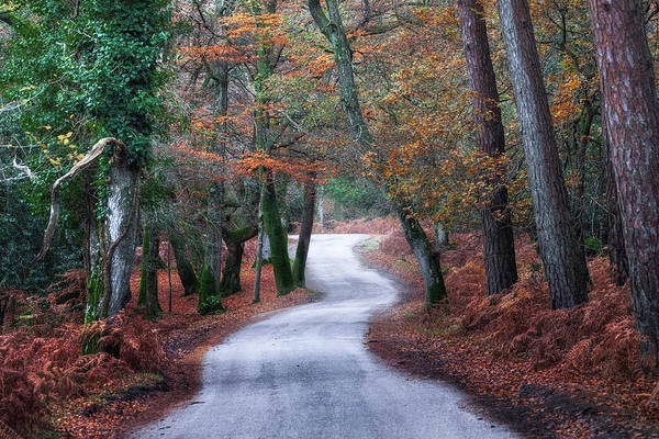 Strasse Photograph - New Forest - England by Joana Kruse
