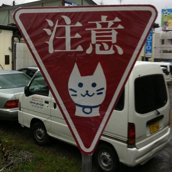 Photograph - 猫注意 by Masamichi Takano