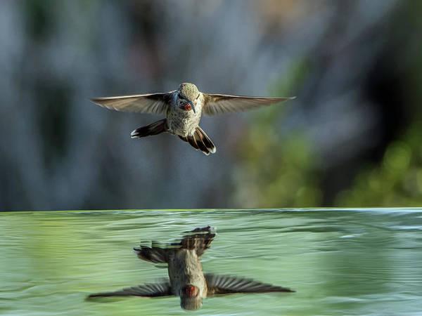Photograph - Anna's Hummingbird by Tam Ryan