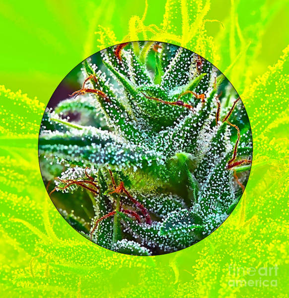 Dope Mixed Media - Cannabis 420 Collection by Marvin Blaine