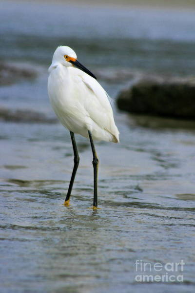 Photograph - Egret by Angela Rath