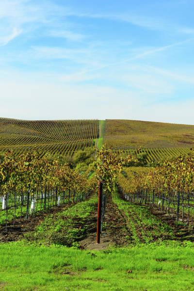 Photograph - Napa Valley California Vineyard by Brandon Bourdages