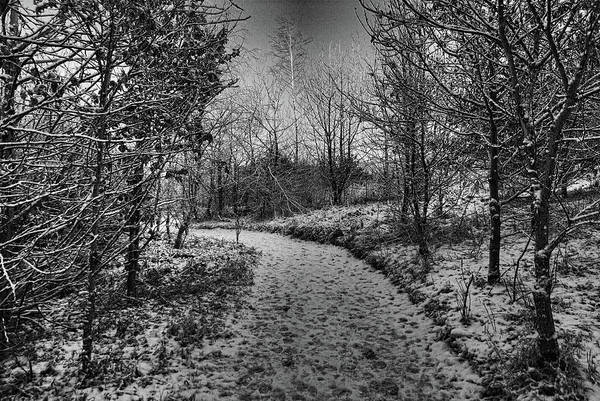 Photograph - Snowy Cabin Wood by Colin Clarke
