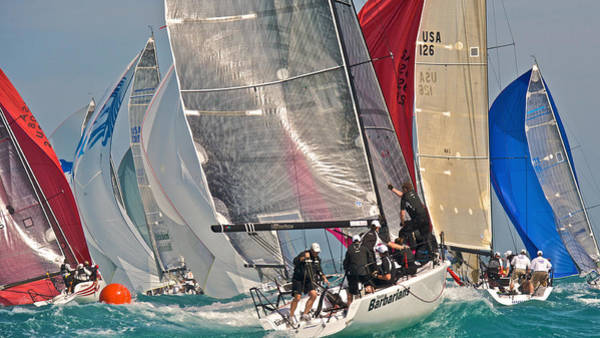 Photograph - Miami Regatta by Steven Lapkin