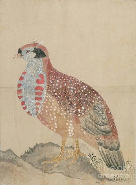 Painting - Birds Of Japan In The 19th Century by Celestial Images