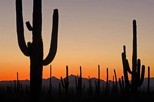 Photograph - Sonoran Desert At Sunset by Arterra Picture Library