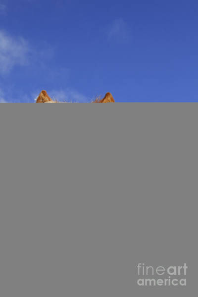 Photograph - Icelandic Horse by Arterra Picture Library