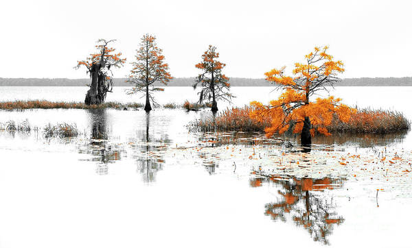 Lillypad Photograph - 16x20 Matted Trees Bushes Lillypads On A Lake by Dan Carmichael