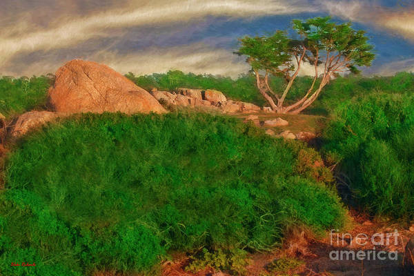 Photograph - 17 Mile Drive Boulder And Tree by Blake Richards
