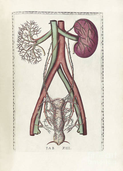 Wall Art - Digital Art - The Science Of Human Anatomy by National Library of Medicine