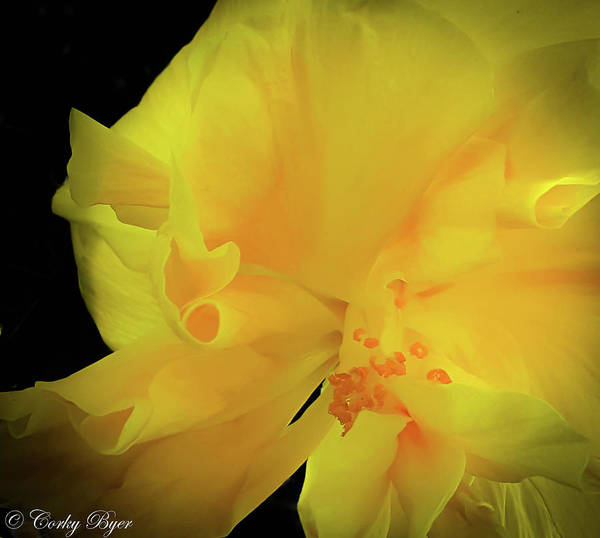 Wall Art - Photograph - Yellow Hibiscus by Corky Byer