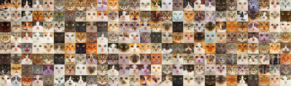 Photograph - 175 Random Cats by Warren Photographic
