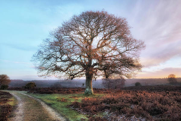 Scenic Photograph - New Forest - England by Joana Kruse