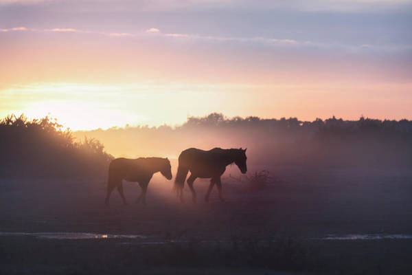Ponies Photograph - New Forest - England by Joana Kruse