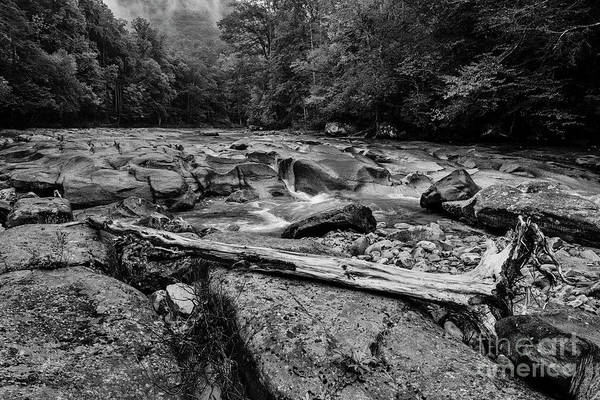 Photograph - Williams River Summer by Thomas R Fletcher