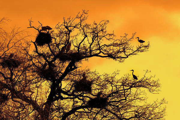 Photograph - Heronry At Sunset by Arterra Picture Library