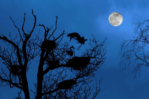 Photograph - Herons At Full Moon by Arterra Picture Library