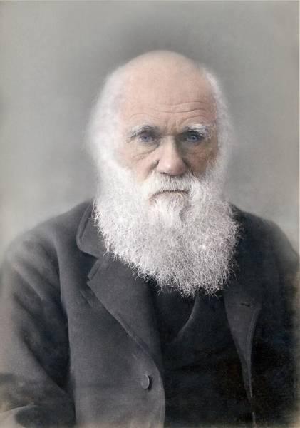 Evolution Photograph - 1879 Colour Charles Darwin Photograph by Paul D Stewart