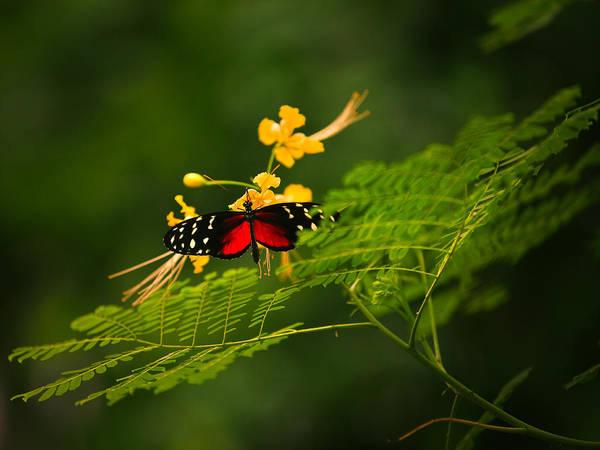 Flower Digital Art - Butterfly by Maye Loeser
