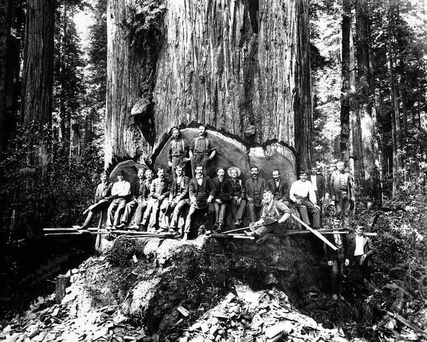 Wall Art - Photograph - 19 Lumberjacks In Redwood Undercut C. 1882 by Daniel Hagerman