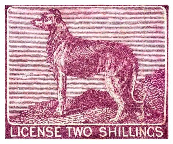 Wall Art - Digital Art - 1904 Ireland Dog License Revenue Stamp by Retro Graphics