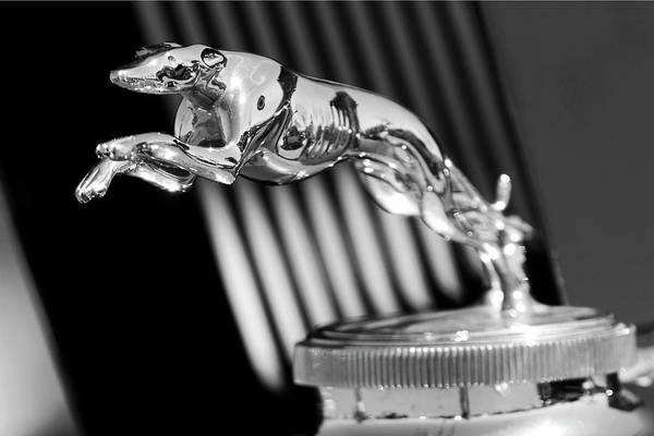 Photograph - 1930 Lincoln Berline Hood Ornament by Jill Reger