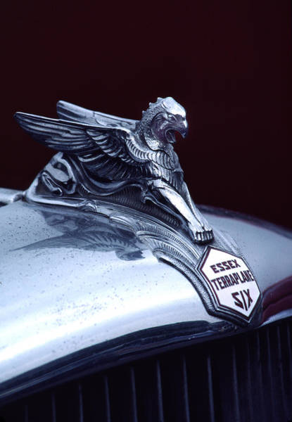 Culture Wall Art - Photograph - 1933 Hudson Essex Terraplane Griffin Hood Ornament by Carol Leigh