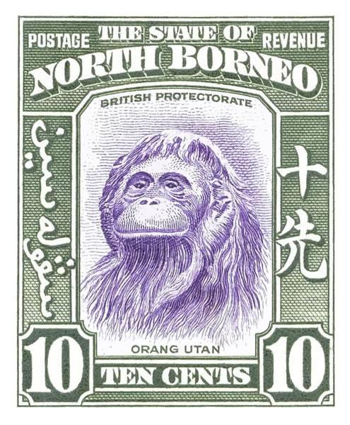 Monkey Wall Art - Digital Art - 1939 North Borneo Orangutan Stamp by Retro Graphics