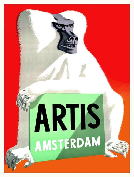 Zoo Digital Art - 1947 Artis Zoo Amsterdam Baboon  Poster by Retro Graphics
